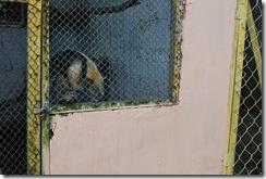 Santiago dos Parques - 05-09-1010 113